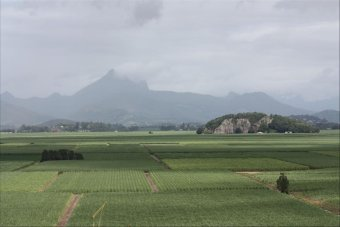 Northern NSW, Mt. Warning in background.